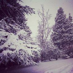 Corvallis snow.