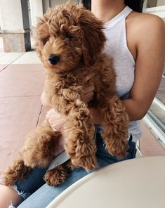 Cute Little Puppies, Cute Dogs And Puppies, Pet Dogs, Doggies, Cute Baby Animals, Funny Animals, Animals Dog, Food Dog, Mini Goldendoodle Puppies