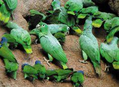 Amazon Rainforest Animals And Plants | Information about the Amazon Jungle - Simon Bolivar Spanish Program