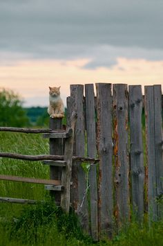 Summer evening in Siberian countryside, Russia. Country Charm, Country Life, Country Living, Crazy Cat Lady, Crazy Cats, Farm Animals, Cute Animals, Country Fences, Lots Of Cats