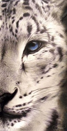By: Sheena Pike Snow Leopard This piece can be purchased on my website...please visit! and thank you for the Pin...I appreciate the exposure. (copyright of SheenaPikeArt )  sheena-pike.artistwebsites.com   https://www.facebook.com/SheenaPikeArtCollection?ref=hl