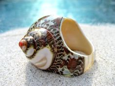 Polished_Brown_Speckled_Seashell_Ring.jpg (600×450)