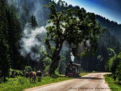 Mocănița huțulcă în drum spre Argel... Romania, Northern Lights, Country Roads, Nature, Trains, Sweet, Naturaleza, Nordic Lights, Aurora Borealis