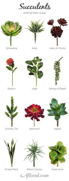 Types of Succulents. Add succulent accents to your wedding bouquets or make your own terrarium with artificial plants from Afloral.com.
