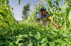 APA Insurance has received $2.5 million(Sh252.2 million) funding to create micro-insurance products for smallholder farmers
