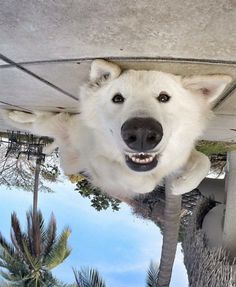 Life is SO good... if you are a brainlessly happy dog who looks like a polar bear.