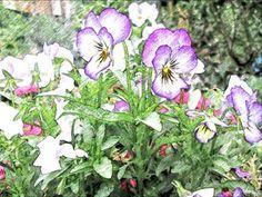 "Raccontare un paese: i miei fiori ""dipinti"" ( 8 foto"