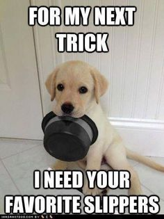 12 Puppy Memes for When Life Gets Ruff - Funny Dog Quotes - 12 Puppy Memes for When Life Gets Ruff Scribble & Stitch The post 12 Puppy Memes for When Life Gets Ruff appeared first on Gag Dad. Funny Puppy Memes, Dog Quotes Funny, Funny Dogs, Funny Husky, Puppy Jokes, Husky Meme, Pet Quotes, Puppy Care, Pet Puppy