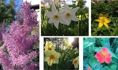 From my garden. About Me Blog, Garden, Flowers, Garten, Lawn And Garden, Royal Icing Flowers, Outdoor, Flower, Florals