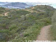 Summit Loop,   San Bruno Mountain State and County Park,  County of San Mateo Parks, San Mateo County  3.5 mile loop