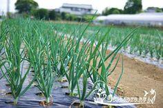 Сад огород– Сообщество– Google+