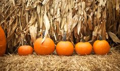 Fall-Pumpkin Patch - Mini-Golf with Hayride and Pumpkins for or 6 at Malt-Tees Mini Golf (Up to Off)