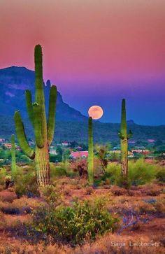Desert - Phoenix AZ