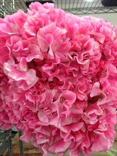 Pink Sweet Pea via G. Page