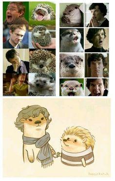 otter sherlock + hedgehog john = ♥︎