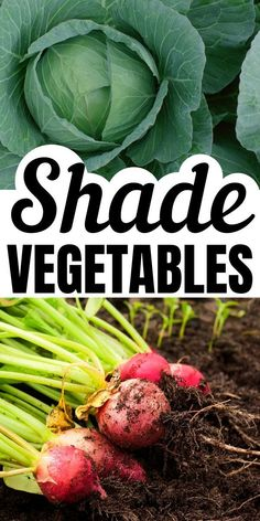Crops that Grow in the Shade - - Choose vegetables that grow in shade to increase your shade garden success. These partial shade vegetables will grow in low light situations. Garden Spaces, Garden Beds, Garden In Small Space, Garden Art, Small Spaces, Amazing Gardens, Beautiful Gardens, Magic Garden, Olive Garden