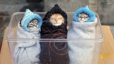 30 Precious little animals wrapped up like burritos. Cuteness overload