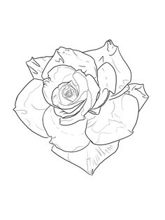 Tattoo Sketches, Tattoo Drawings, Art Drawings, Tattoo Lettering Design, Tattoo Designs, Rose Tattoos, Flower Tattoos, Rose Reference, Ufo Tattoo