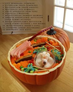 animal cell pumpkin - Google Search