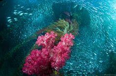 Raja Ampat : Ultimate Underwater Expedition @XL Axiata #PINdonesia