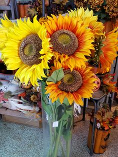 Beautiful Yellow And Orange Sunflowers For Fall Planting. | The Family Tree  Garden Center