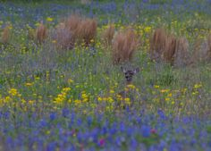 Can you spot the deer? At Lake Somerville State Park near College Station in Texas