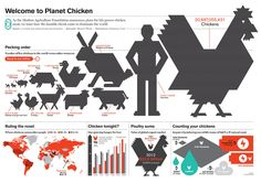 Infographic: Welcome to planet chicken Pecking Order, Meat Chickens, Journalism, Planets, Nice Ideas, Magazine, Infographics, Infographic, Journaling