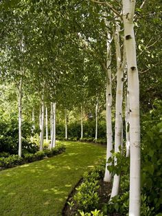 Backyard Garden With Benches And Birch Trees - Enchanting Beauty ...