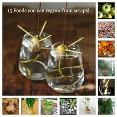 15 Foods you can regrow from scraps. OK, not backyard food gardening per se, though you could transfer some of these to a garden. Having great success with regrowing green onions in a jar, looking forward to experimenting with the ones in this list. Vegetable Garden, Garden Plants, Garden Gnomes, Buy Plants, Plantas Indoor, Dream Garden, Gardening Tips, Urban Gardening, Indoor Gardening