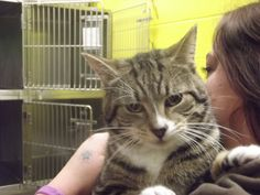 Defiance, OH. Domestic Short Hair • Adult • Male • Medium. Fort Defiance Humane Society. Petfinder.com is the world's largest database of adoptable pets and pet care information. Updated daily, search Petfinder for one of over 300,000 adoptable pets and thousands of pet-care articles!