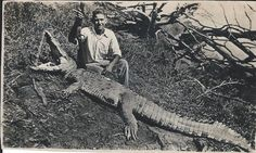 Uncle Bert Rubiolo 1934 with a crocodile he killed on the family cane farm in North Queensland, Australia