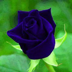 Bonita★★! que a bondade esteja sempre em seu coração! !