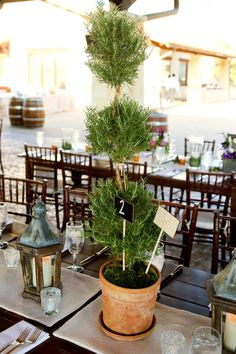 could do some rosemary topiaries...maybe on the head table