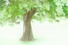 Simplicity in a tree. Light and form speak. Trees, Wall Art, Plants, Beauty, Tree Structure, Plant, Beauty Illustration, Wood, Planets