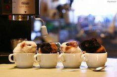 Es ist am besten, den Montag mit einer Tasse Kaffee anzufangen.