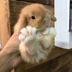 35 Funny Furry Animals To Brighten Your Day - LoveIn Home Cute Baby Bunnies, Baby Animals Super Cute, Cute Little Animals, Cute Funny Animals, Cute Babies, Bunny Paws, Pet Bunny Rabbits, Dwarf Bunnies, Cute Bunny Pictures