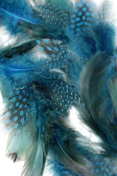 "Teal Blue Guinea Feather Garlands 63"" long 11.00 each / 2 for 10.00 each"