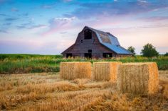 Pastoral in Pink by spudalicious. @go4fotos