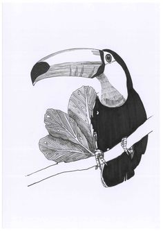 Sketch_toucan_08