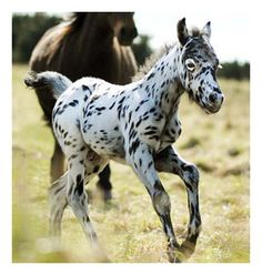Pretty!  Looks like a cross between an English Setter & a horse!  Ha.