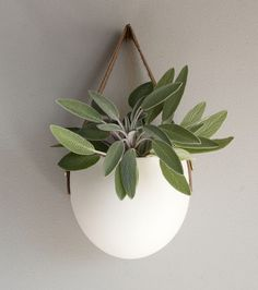 hanging ceramic pods by Farrah Sit