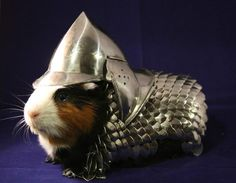 "Hand Made Guinea Pig Scale Mail and Helmet Armor | eBay (currently 24,300 for charity!)   hand-made scale-mail and tiny steel helmet will keep you guinea pig protected and secure in all situations. The scale-mail is made from polished steel scales and steel rings. It was painstakingly ""woven"" by me over several weeks in an effort to better prepare my guinea pig Lucky for the dangers of the modern world. The helmet was purchased at a Renaissance Faire later as it was the perfect finishing…"