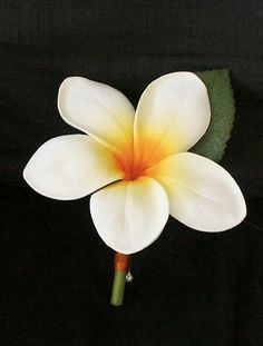 Plumeria Tropical Wedding Boutonniere - Wedding Boutonnieres Your Choice of Accent Color on Etsy, $8.00