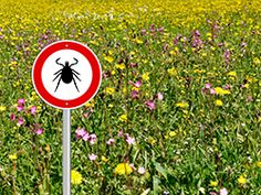 We've heard that Lyme is a disease transmitted to us from a tick bite