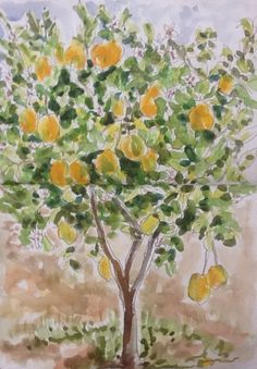 2016-03-23 sketching the mysterious tree -it's not an orange or lemon tree but the blossom smells wonderful! Morocco