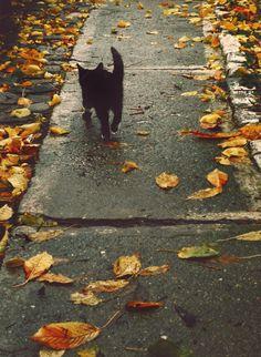 black cat + leaves