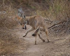 Wildlife of China - Wikipedia