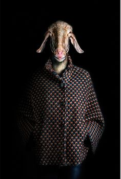 Fashionably dressed animals photographed by Miguel Vallinas  Titled Segundas Pieles (Second Skins), the ongoing series of dvertising and in...