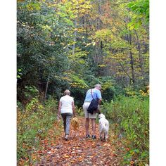 Everything you need to know about #petfriendly #hiking #trails and walks in our area: https://www.greatsmokies.com/hiking.php