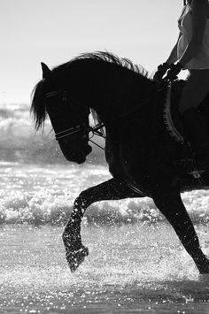 ride, beaches, anim, the ocean, at the beach, beach photography, black horses, beach hors, beach time